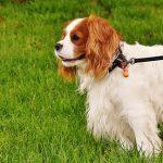 dog-1610943_640
